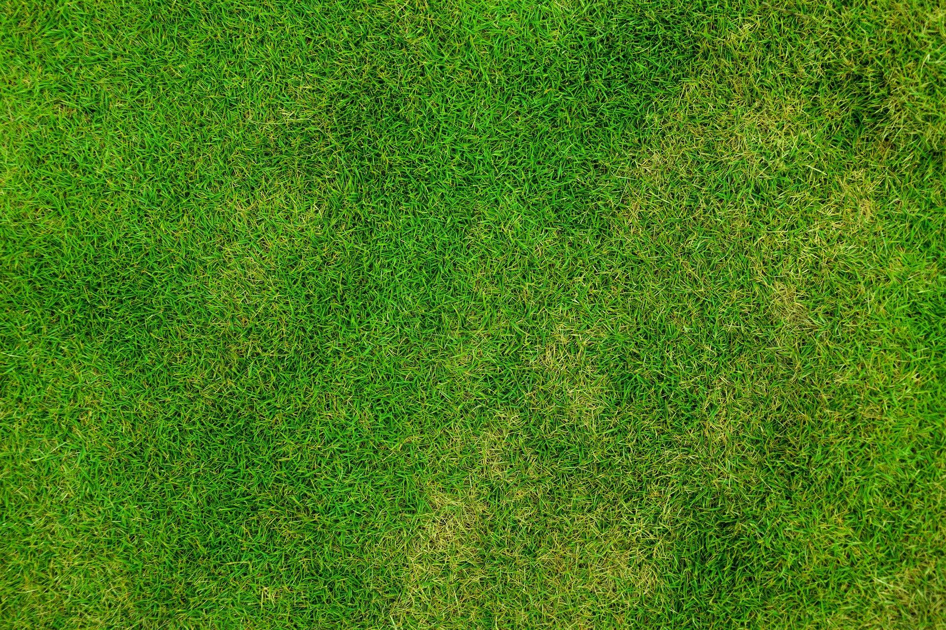 groen gazon tips